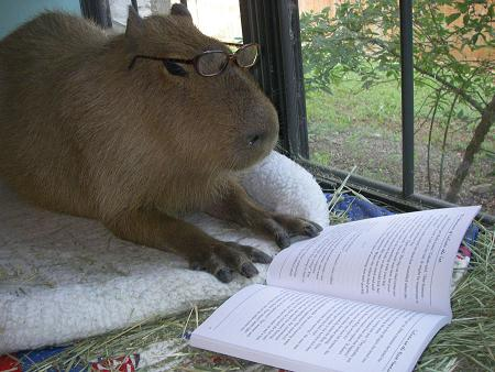 capy-reading